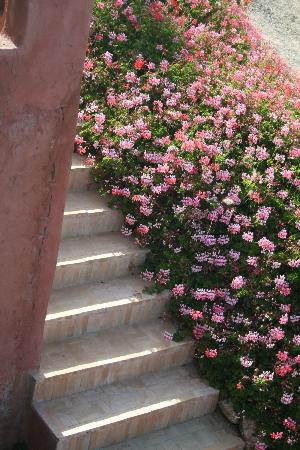 Villa Gonatouki: Beautiful flowers everywhere!