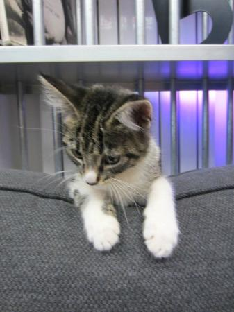 Stay Inn Taksim Hostel: #bunk kitty <3