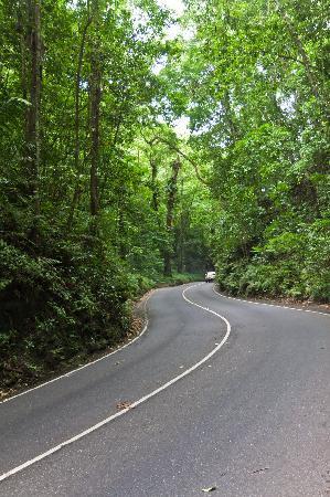 Fern Gully: Woodland drive