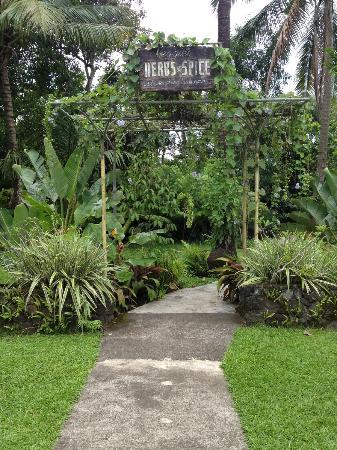Sitio de Amor: Herbs & Spices