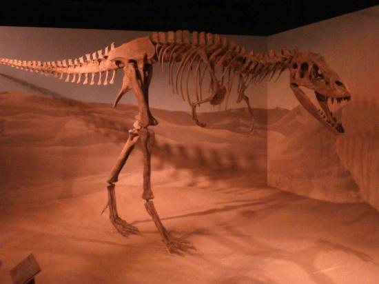 South Carolina State Museum : Albertosauris Libratus