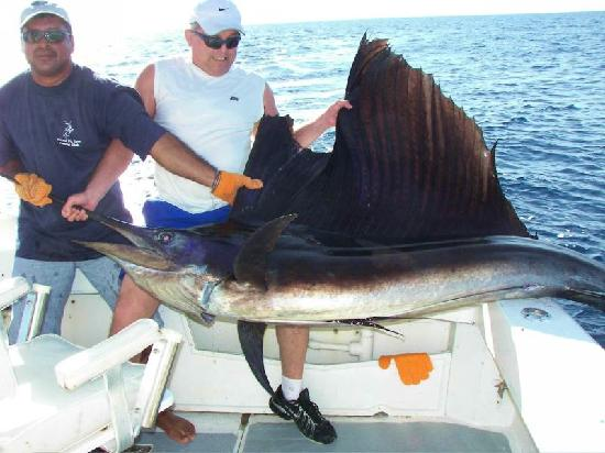 Panama Big Game Fishing Club Day Tours: Big Sail