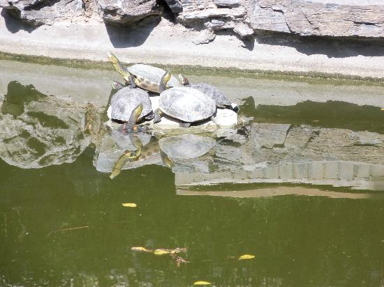 Soluxe Sunshine Courtyard Hotel: Turtles in the pond in one of the courtyards