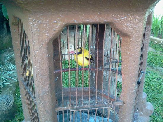 Prima Cottage: Birdie in a cage