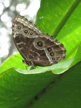 Hotel Mariposario Montezuma Gardens: Inside the butterfly garden