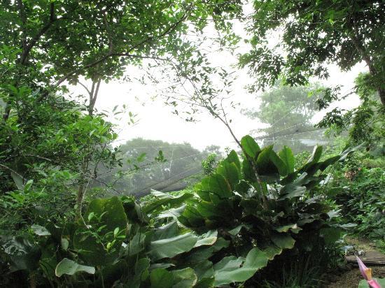 Hotel Mariposario Montezuma Gardens: Butterfly garden