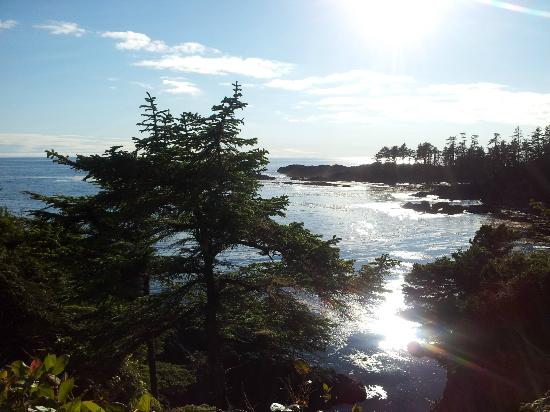 Ocean Dreams B&B: Wild Pacific Rim Trail