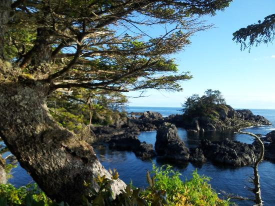 Ocean Dreams Guest Suites: Wild Pacific Rim Trail