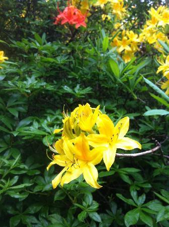 Rowallane Garden: Rowallane flowers