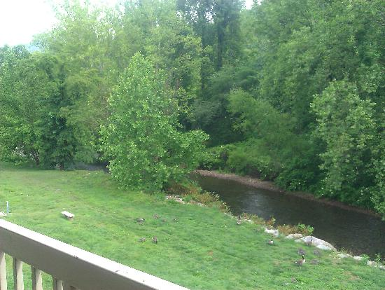 Quality Inn: Watching geese from our balcony