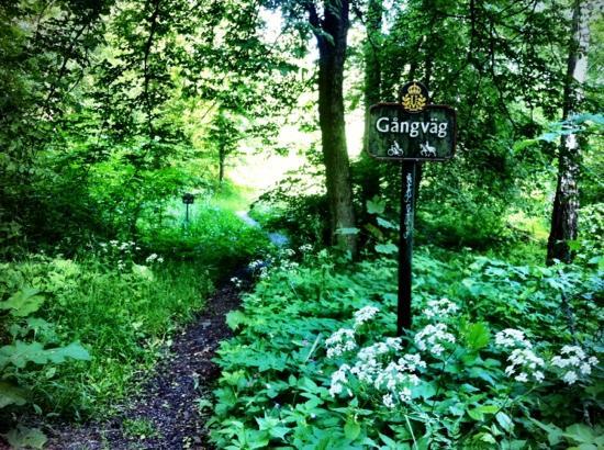 Djurgården: walking trail