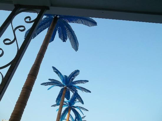 Blue Palms: looking up at the blue palm trees by the pool