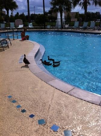 SpringHill Suites Orlando at SeaWorld®: some feathered visitors