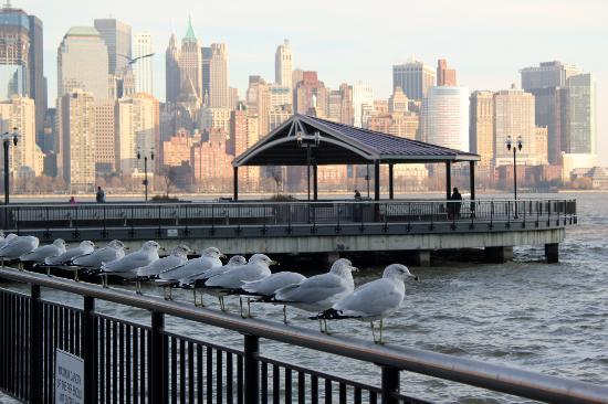 Hyatt Regency Jersey City: Seagulls?