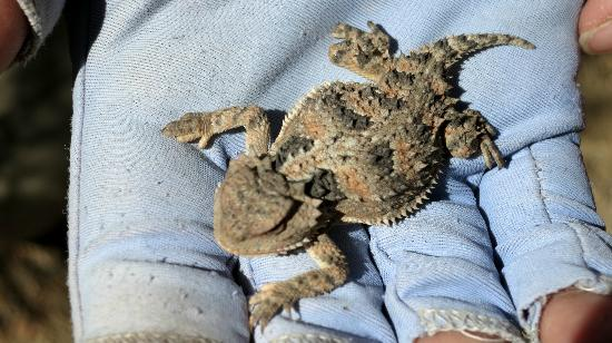 Outspire Hiking and Snowshoeing: Lizard found on trail