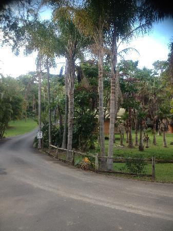 Paradise Palms: Surrounds