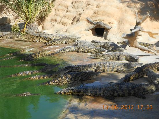 Djerba Explore: crocodiles