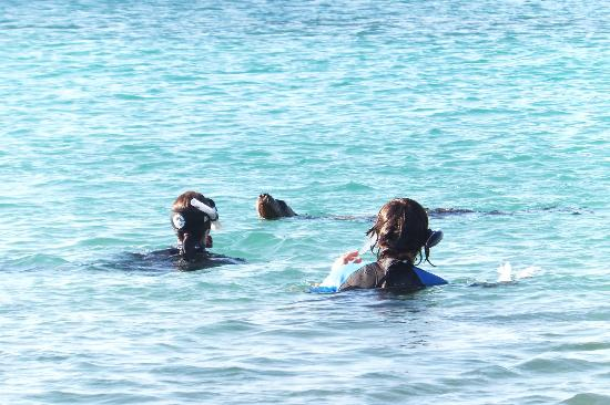 Galapagos Unbound - ROW Day Tours and Adventures: Sea lions at la loberia on Floreana
