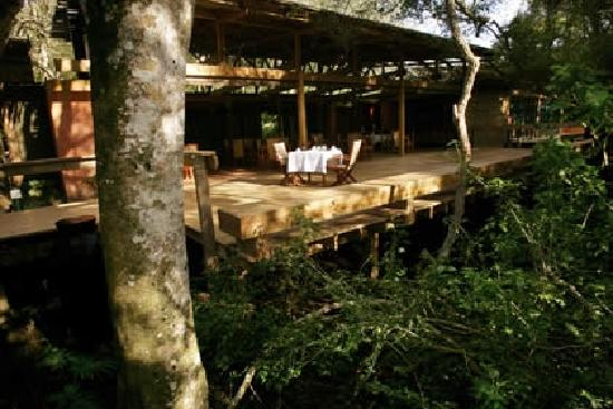 Intsomi Lodge: Breakfast in the forest