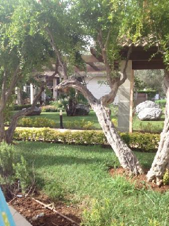 Aparthotel Playa Mar & Spa: grounds