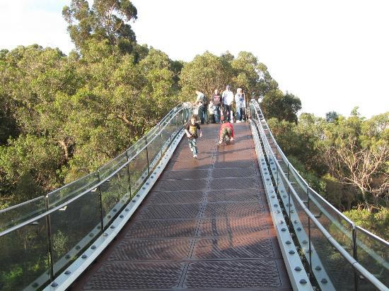 Lotterywest Federation Walkway: Glass Bridge