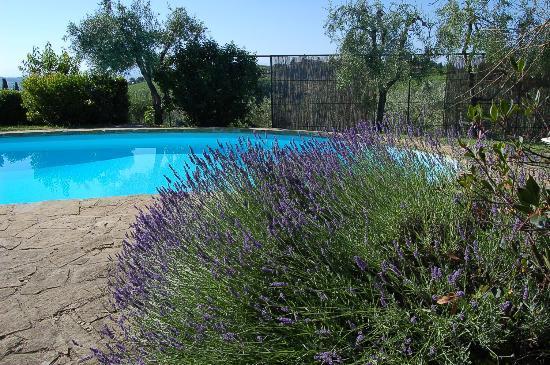 B&B Il Borghetto: Swimming Pool