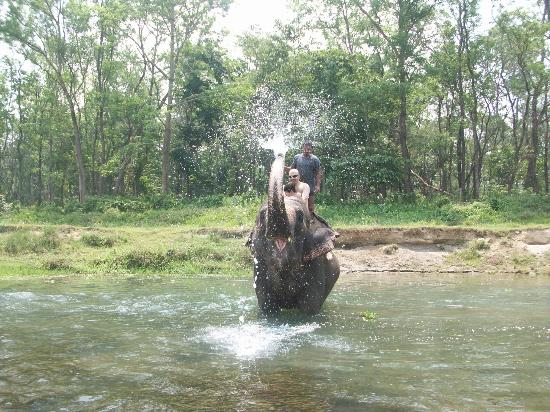 Hotel Parkside: elephant bath in river