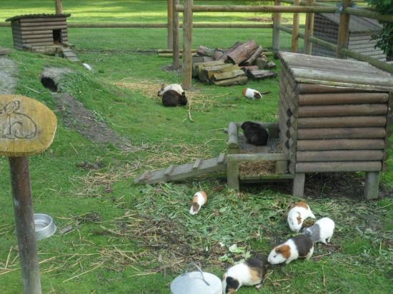 Camping Haliotis: petting zoo