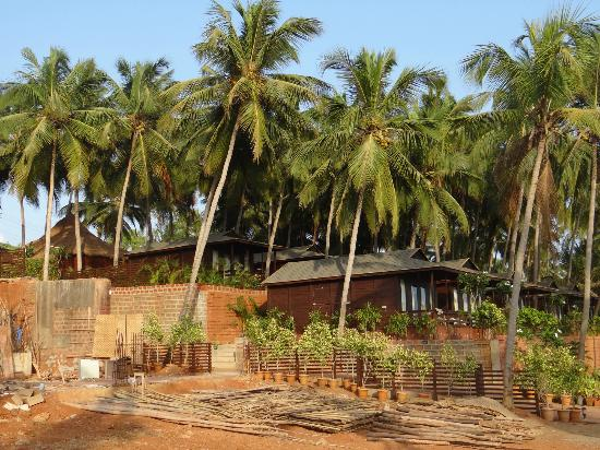 cottages covered under coconut trees picture of riva beach resort