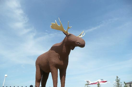 Moose Jaw Trolley: The giant moose opposite the information centre