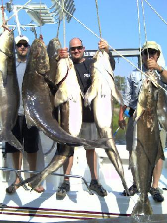 Rock Solid Fishing: Cobia Masters