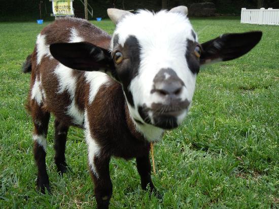 Narita, Japan: 動物たちには一頭一頭名前がつけられています。愛されている証拠ですね。この子の名前は まーろ♡