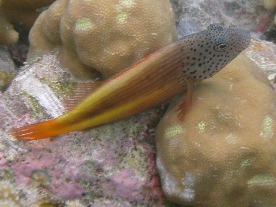 Wakatobi Dive Resort: Some fish do pose