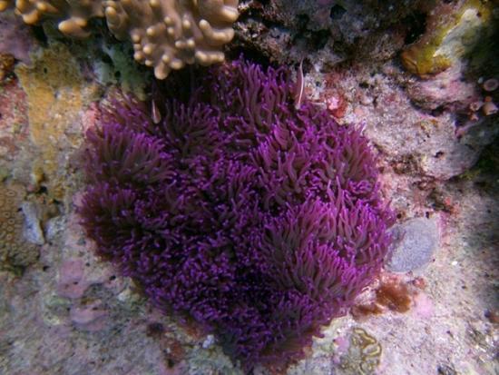 """Wakatobi Dive Resort: Taken at """"Spiral Corner"""" site"""