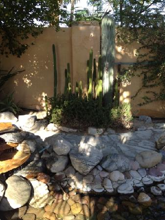 Hacienda Hot Springs Inn: cactus on grounds