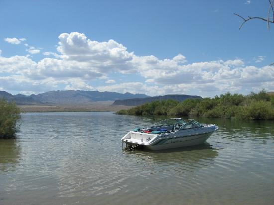 Just one of the hundreds of beaches picture of lake for Lake mohave fishing report