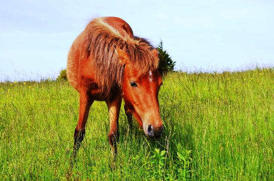 Mouth of Wilson, VA: Wild Pony
