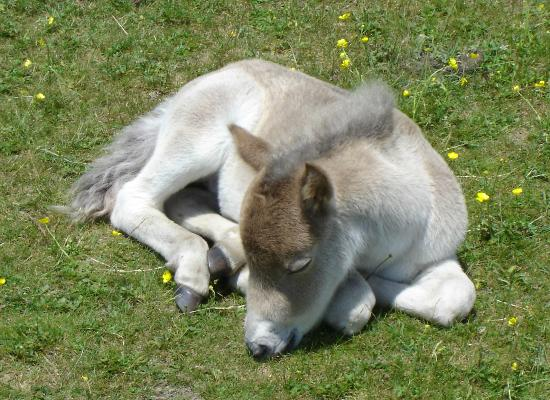 Mouth of Wilson, VA: Sleeping Foal