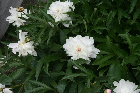 Rocky Acres Inn B&B: Flowers in garden