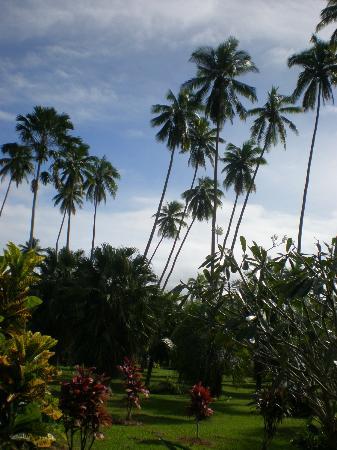 Daku Resort: view from porch---yep, looks like Fiji