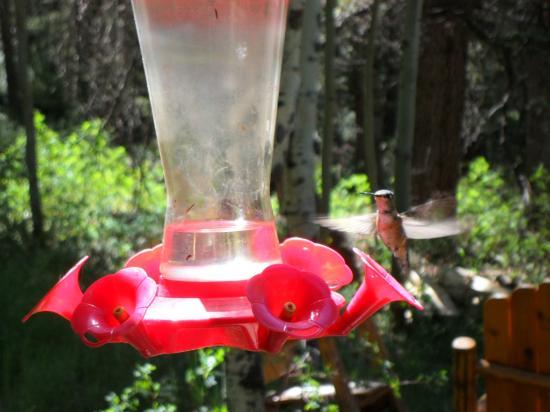 Pioneer Guest Cabins: hummingbird