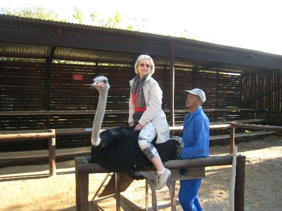 Cape Team Tours - Day Tours: Ride an ostrich