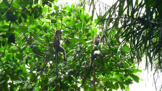 Magilla Bali Tours: Monkey forest2