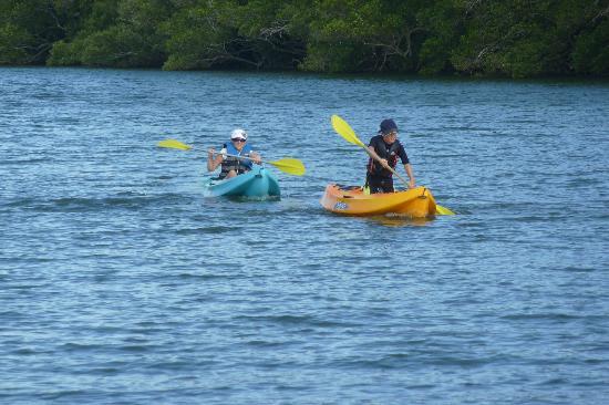 Nambucca River Tourist Park: Kayaks
