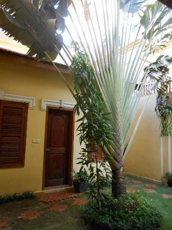 Kambuja Inn: big palm outside my room