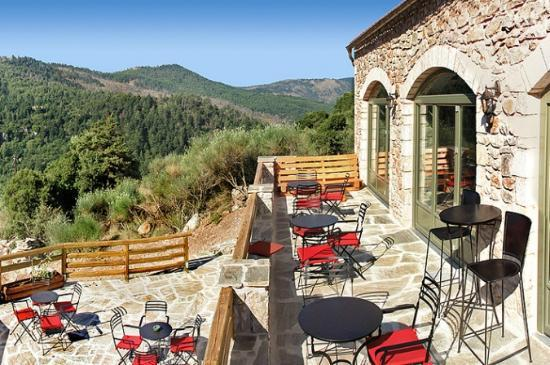 Pritanio Guesthouse: la terrasse vue vers la foret