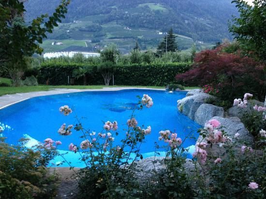 Hotel Wiesenhof: piscina 
