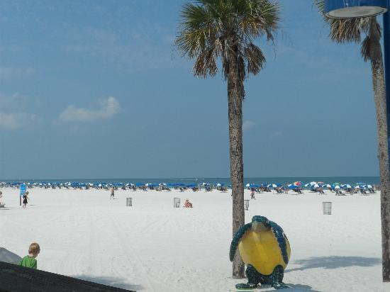 ‪‪Clearwater Beach‬: clearwater‬