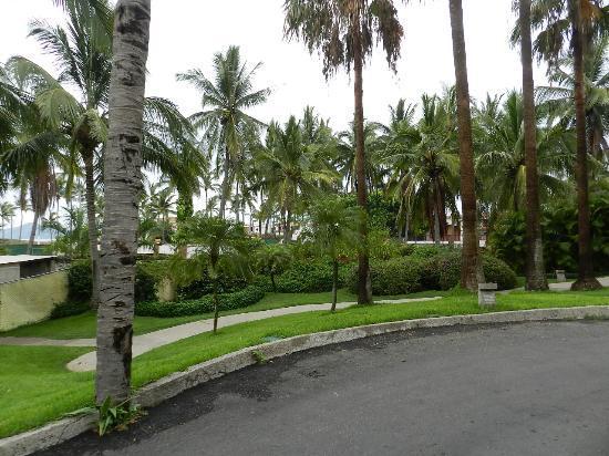 landscape picture of sea garden mazatlan mazatlan