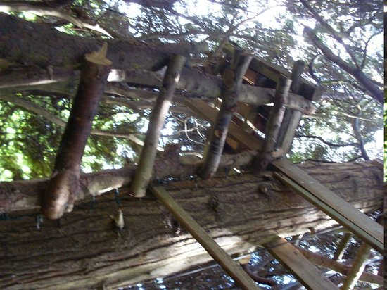 Orchards Retreat: Tree house